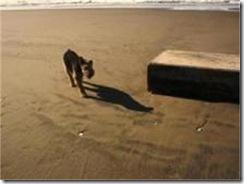 oregon box dog