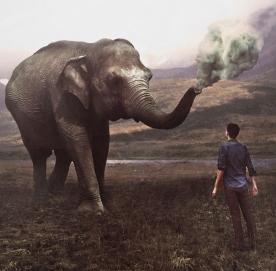 inspiracao_elefante