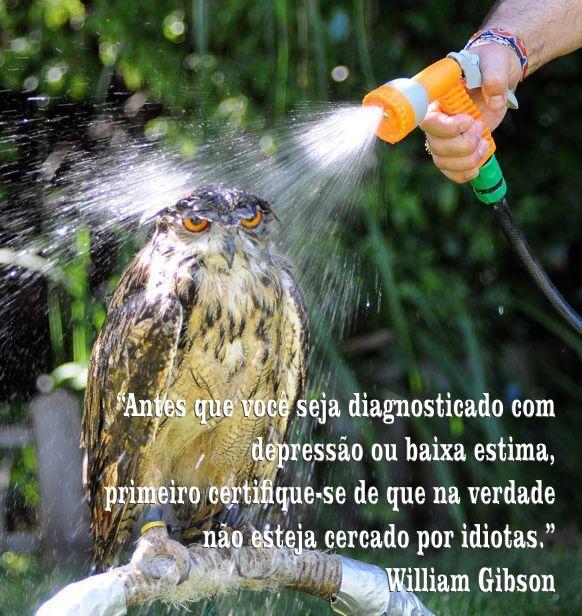 coruja_stress.jpg