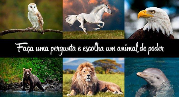 escolha-animal